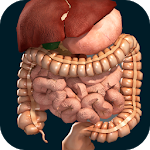 Download Internal Organs in 3D (Anatomy) APK
